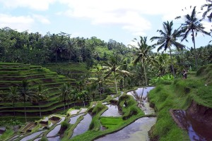 Things to See in Bali: Such as a Cat Shit Coffee Plantation